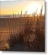 Warm Sea Grass Metal Print