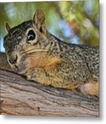 Wary Squirrel Metal Print