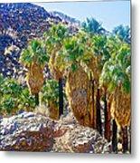Washingtonian Fan Palm Grove Along Lower Palm Canyon Trail Near Palm Springs-california  Metal Print