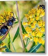 Wasp 2 Metal Print