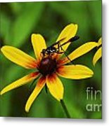 Wasp On A Susan Metal Print
