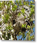 Wasps' Nest Metal Print