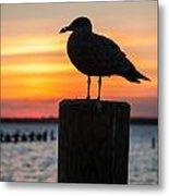 Watch The Birdie Metal Print