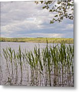 Watchaug Pond Metal Print