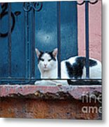 Watchful Cat, Mexico Metal Print