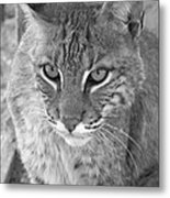 Watchful Eyes Black And White Metal Print by Jennifer  King