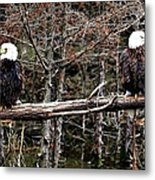 Watchful Eyes Metal Print