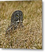 Watchful Eyes Of The Great Gray Owl Metal Print