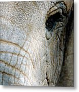 Watchful Metal Print