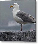 Watchful Seagull Metal Print
