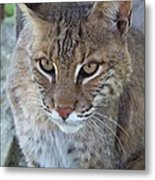 Watchfull Eyes Metal Print by Jennifer  King