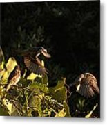 Watching A Fly-by Metal Print