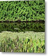 Water And Green Metal Print