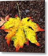 Water Colored Leaf - Autumn Metal Print