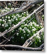 Water Cress Metal Print