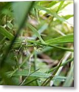 Water Droplet On Grass Blade Metal Print