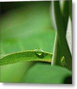 Water Droplets #2 Metal Print