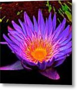 Water Droplets On Lily Metal Print
