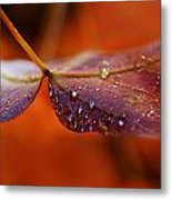 Water Droplets On Red Autumn Leaf Metal Print