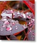 Water Drops After The Rain Metal Print