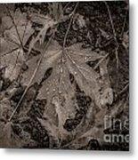 Water Drops On Fallen Leaves Metal Print