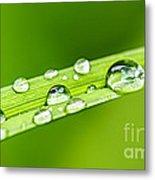 Water Drops On Grass Blade Metal Print