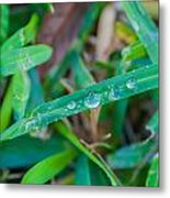 Water Drops On The  Grass 0003 Metal Print