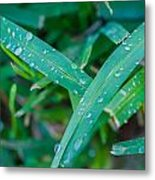 Water Drops On The  Grass 0004 Metal Print
