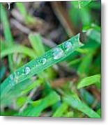 Water Drops On The  Grass 0006 Metal Print