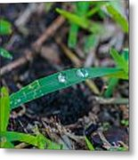 Water Drops On The  Grass 0009 Metal Print