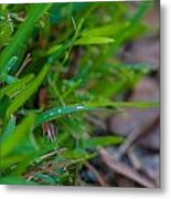 Water Drops On The  Grass 0012 Metal Print