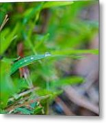 Water Drops On The  Grass 0013 Metal Print