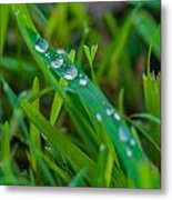 Water Drops On The  Grass 0014 Metal Print