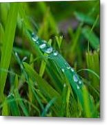Water Drops On The  Grass 0015 Metal Print
