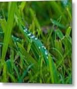Water Drops On The  Grass 0016 Metal Print