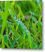 Water Drops On The  Grass 0017 Metal Print