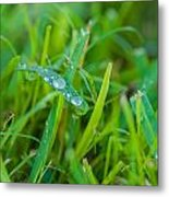 Water Drops On The  Grass 0018 Metal Print