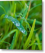 Water Drops On The  Grass 0019 Metal Print