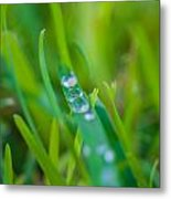 Water Drops On The  Grass 0021 Metal Print