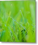 Water Drops On The  Grass 0027 Metal Print