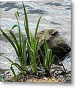 Water Fern Metal Print