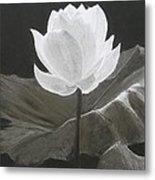 Water Flower Metal Print