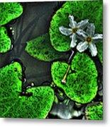 Water Flowers Metal Print
