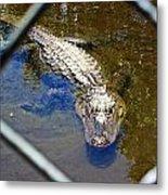 Water Hole Gator Metal Print
