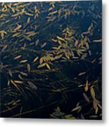 Water Leaves Metal Print