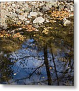 Water Leaves Stones And Branches Metal Print