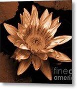 Water Lilies 012 Metal Print