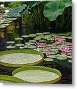 Water Lilies And Platters And Lotus Leaves Metal Print
