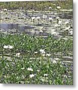 Water Lilies Metal Print by Gordon  Grimwade
