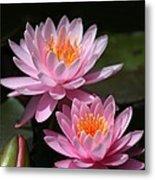 Water Lilies Love The Sun Metal Print by Sabrina L Ryan